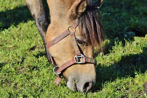 Horse, Ride, Reiter, Equestrian, Coupling, Animal, Head