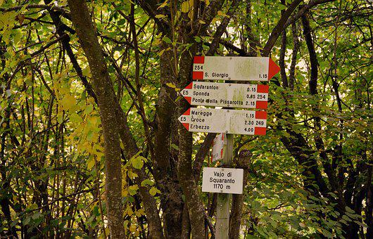 Signals, Excursion, Forest, Indications