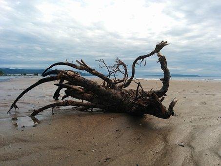 Sky, Beach, Sand, Water, Tree, Stump, Horizon