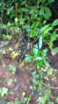 Spider, Wab, Green