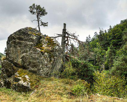 The Gorge Of Hell, Lozère, Rock, Tree
