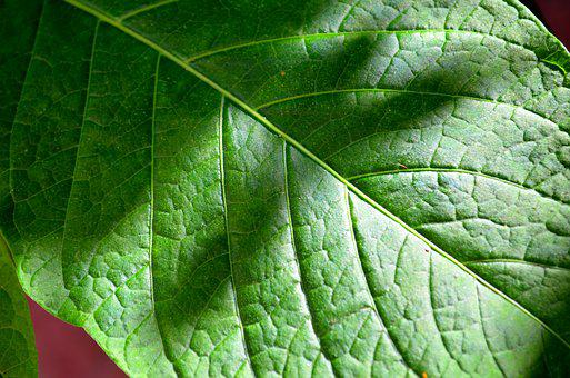 Leaf, The Green Background, Veins, Pattern, Plant