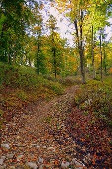 Trail, Forest, Autumn, Excursion, Mountain