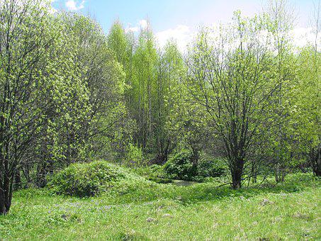 Spring, Forest, Blue Sky, Sun, Nature, Grass, Tree, Sky