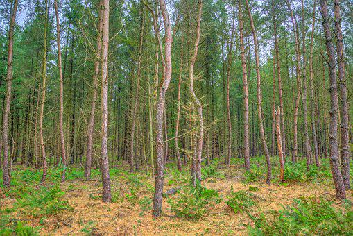 Trees, Standing, Forest, Woods, Nature, Landscape