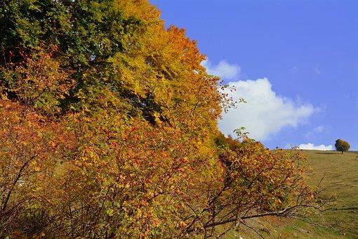 Trees, Autumn, Mountain, The European Path, E5