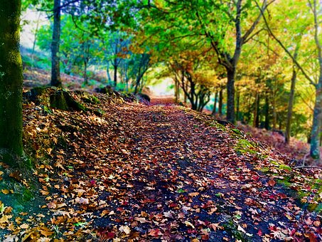 Path, Leaves, Forest, Autumn, Trees, Tree, Nature