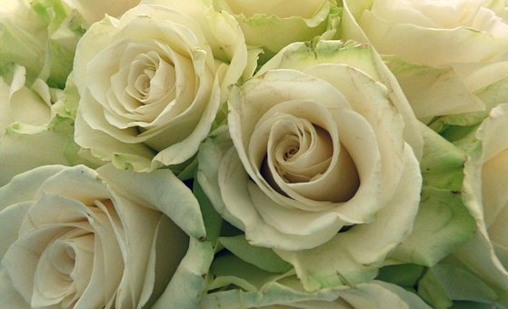 Roses, Bouquet, Flowers, White Roses, Butyric, Wedding