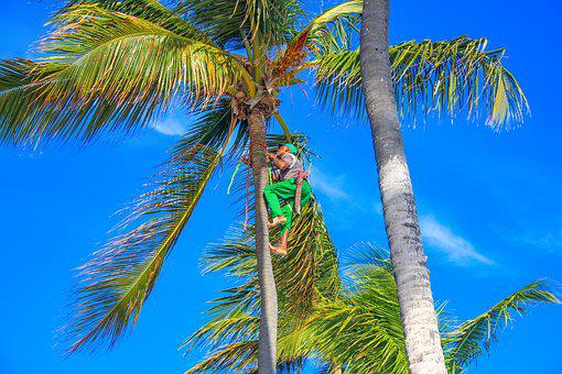 Dominican Republic, Palm Trees, Machete, Work, Tropics