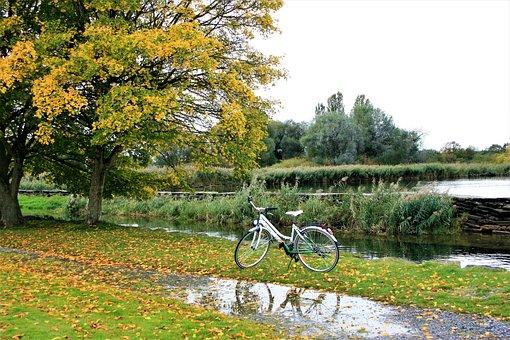 Bike, Autumn Gold, Foliage, Beach, Lake, Bodensee, Rain