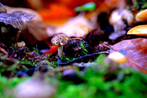 Mushroom, Small, Forest, Nature, Autumn, Moss, Brown