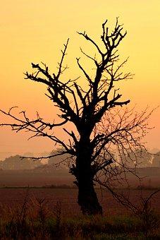 Tree, Dead, Dry, Sky, Yellow, Sunrise, Dawn, Field
