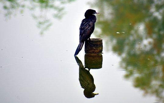 Darter Bird, Anhinga, Fishing, Black Bird, Aquatic