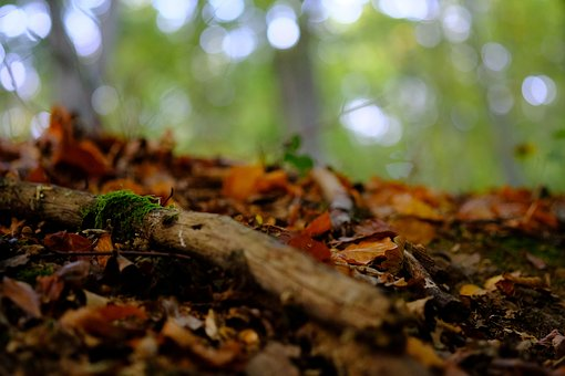 Forest Floor, Forest, Nature, Moss, Autumn, Leaves