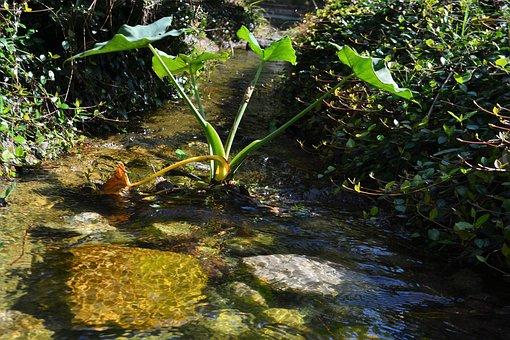 Stream, Creak, Herman National Park, Houston Texas