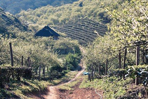 Moc Chau, Son La, Vietnam