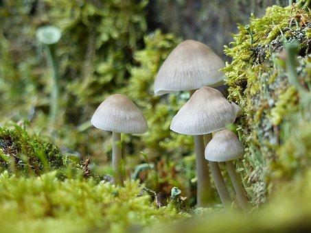 Mushrooms, Small, Small Mushroom, Autumn, Moss, Nature