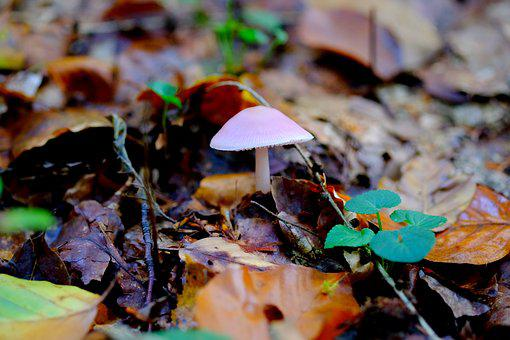 Comatus, Mushroom, Forest, Nature, Autumn, Moss, Brown