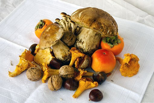 Porcini Mushrooms, Boletus Edulis, Mushrooms