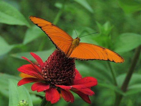 Red Flower, Orange Butterfly, Tropical Garden