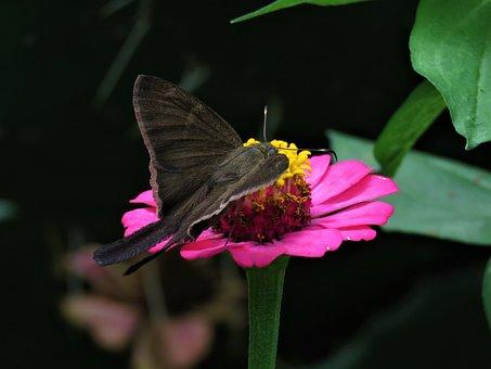 Pink Flower, Butterfly, Tropical Garden