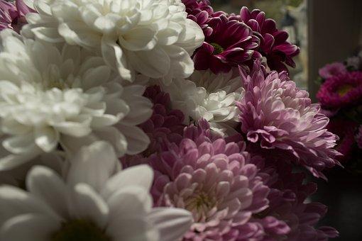 Pink Flowers, Pink Petals, Pink, Flowers, Summer