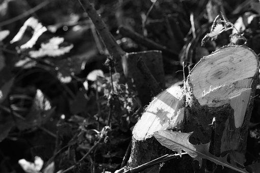 Tree Stump, Stump, Tree, Nature, Black And White