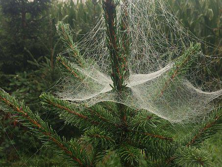 Spider Web, Christmas Tree