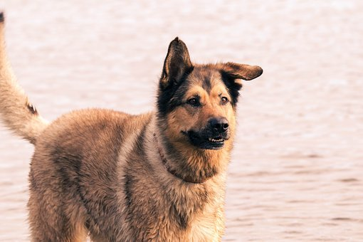 Dog, Water, Wet, Action, Jumps, Fur, Pets