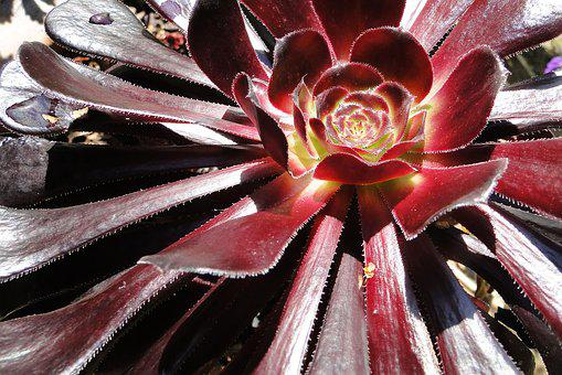 Flower, Succulent, Offer, Nature, Gift, Plant, Florist
