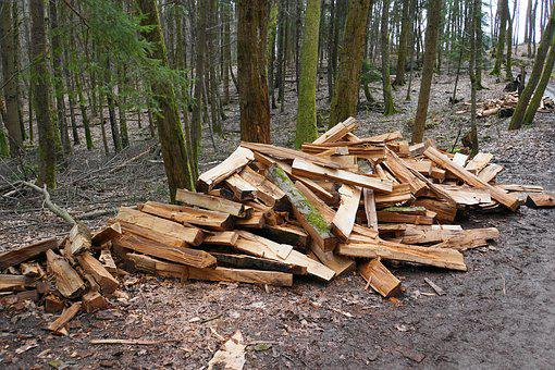 Firewood, Wood, Growing Stock, Firewood Stack, Forest