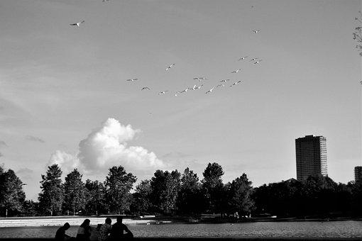 Flock Of Birds, Family, Herman National Park, Houston