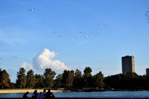Flock, Birds, Family, Lake, Houston, Texas, Herman Park