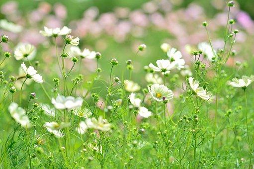 Landscape, Plant, Flowers, Natural, Autumn, Green