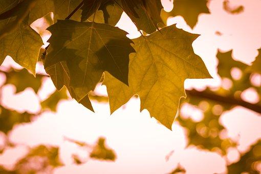 October, Leaves, Foliage, Autumn, Foliage Dries