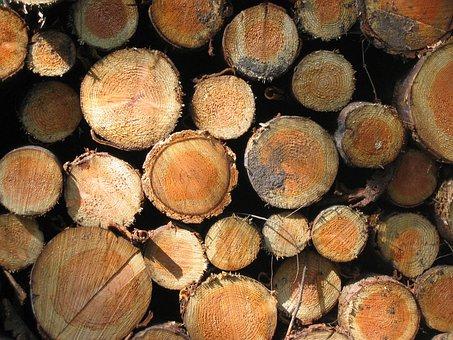 Tree Stump, Bark, Forest, Tree, Wood, Nature, Log