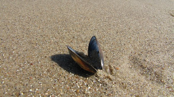 Shells On The Beach, Sand, Shell, Beach, Mussels