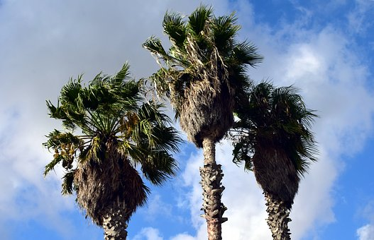 Palm Trees, Sky, Holiday, Summer, Sun, Tropical