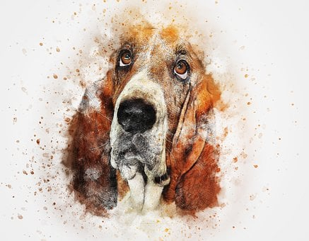 Dog, Basset, Pet, Art, Abstract, Watercolor, Vintage
