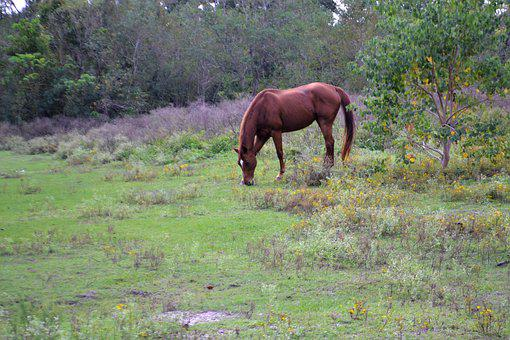 Horse Feeding, Grass, Animal, Wild, Wilderness, Horse