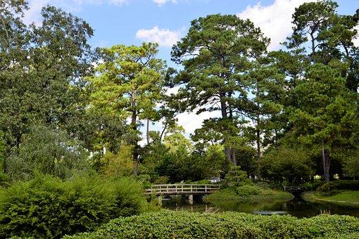 Japanese Garden, Wooden Bridge, Woods, Botanical Garden