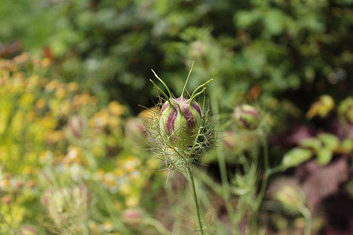 Plant, Alien, Botanical Gardens, Denver