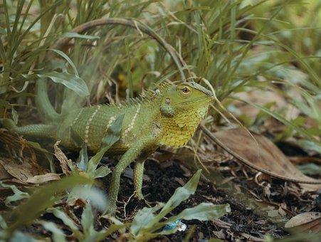 Chameleon, Nature, Animal, Lizard, Reptile, Close