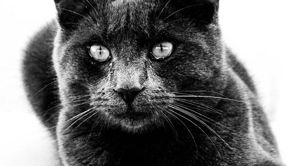 Cat, Close-up, B, Kitten, Cute, Domestic, Kitty