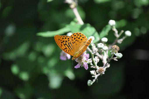 Butterfly, Nature, Colors, Butterflies, Flowers, Insect