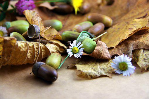 Autumn, Leaves, Dried Leaves, Flowers, Daisy