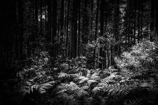Forest, Darkness, Night, Trembling, Fear, Nightmare
