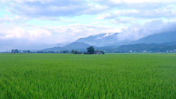 Brown Avenue, Taitung, Taiwan, In Wheat Field