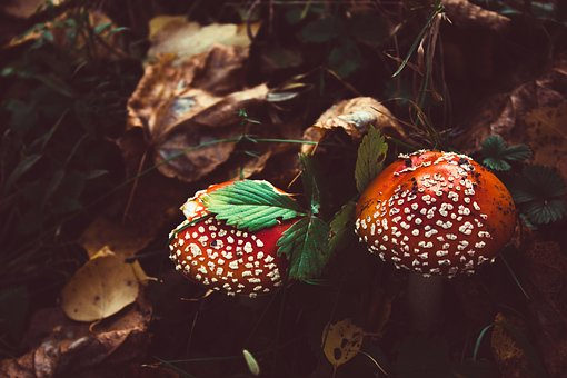 No One, Mushroom, Nature, Food, Autumn, Sheet, Forest
