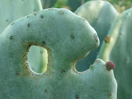 Cacti, Green, Plant, Thorns, Succulents, Nature